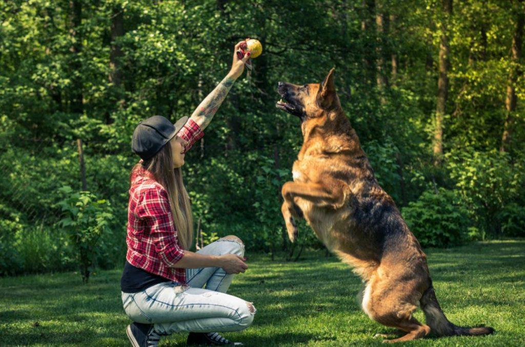 Dog-Training-1024x677