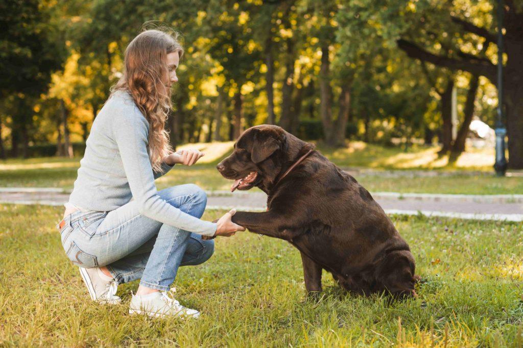 Educacion-Canina-la-importancia-de-la-gestion-emocional-frente-al-adiestramiento-basico-2-1024x683